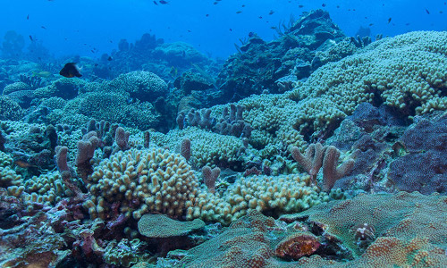 A biologically diverse coral reef.